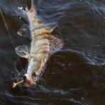 Изменение климата грозит вымиранием рыбы