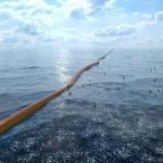 Морская фауна Японии поселилась у берегов США