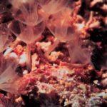 Биологи нашли живородящих морских червей