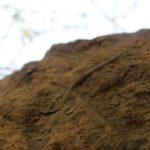 Найдены следы животных нарекордной глубине наднеокеана