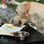 Ученые: собаки икошки недолжны есть сырое мясо