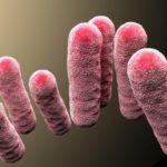 ГМ-бактерии заставили красить джинсы