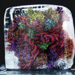 Жизнь подмикроскопом: зачем замораживать молекулы