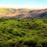 Древние растения «захватили» сушу почти настомиллионов летраньше, чемсчиталось
