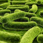 Химики подсмотрели синтез аммиака убактерий