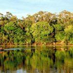 Втропиках Амазонки найдены древние «мегаполисы»