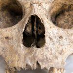 ВМексике втайном захоронении нашли более 160человеческих черепов