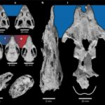 Древним млекопитающим помогли большой мозг ималенькая плодовитость