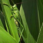 Глобальное потепление породит огромное количество насекомых-вредителей