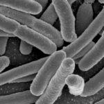 Ученые призывают создать «ноев ковчег» длямикробов