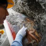 Наруинах Помпеи нашли эротическую фреску