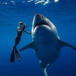 Биологи нашли самую маленькую акулу вмире