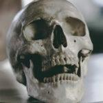 Вчерепе человека нашли золотое сечение: тайны мозга