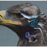 Bel Trading and Consulting Ltd. презентовала новую систему предупреждения столкновений с птицами